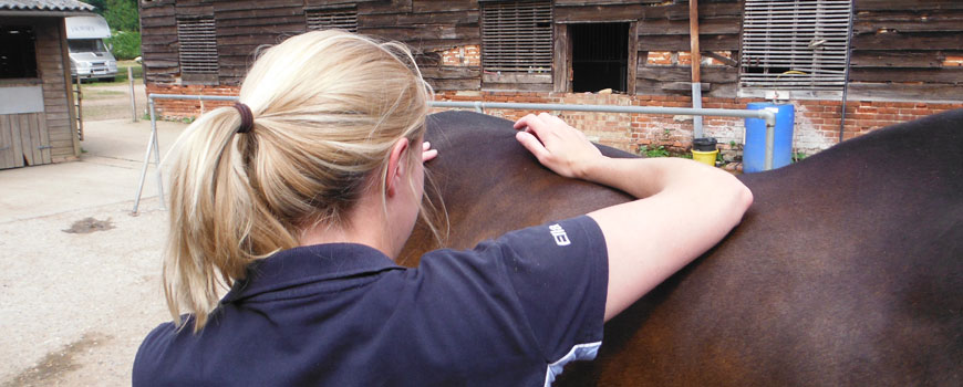 Horse Physiotherapy Suffolk