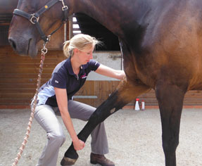 Horse Physiotherapy Treatment Suffolk